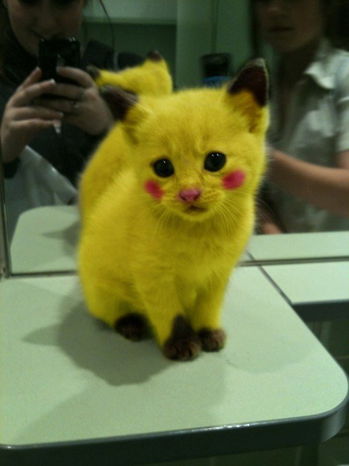 i-think-pikachu-was-a-mouse-and-not-a-cat