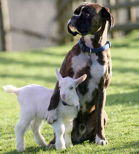dont-worry-i-got-your-back-woof